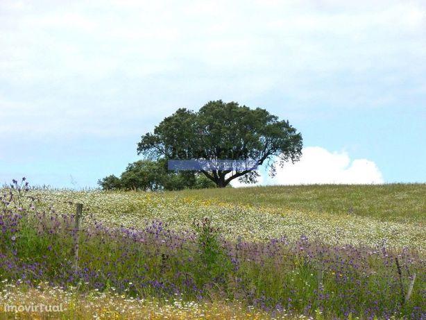 162ha terra aptidão p/ gado, cereais e turismo. Portugal, Baixo Ale...