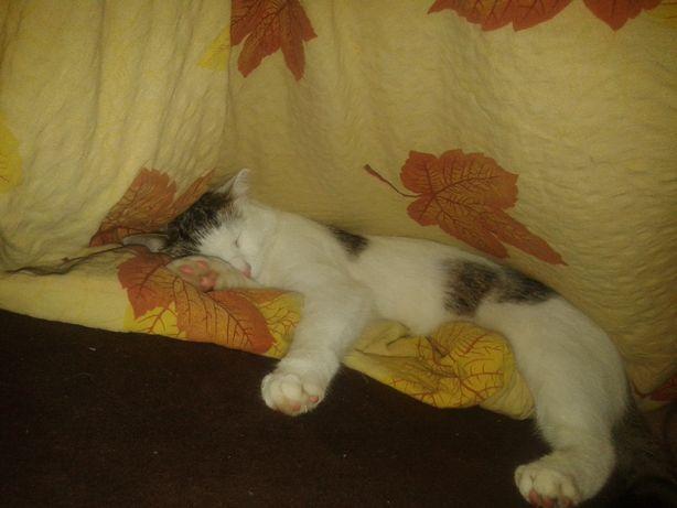 Ema i Tosiek polecają: psy i koty do adopcji. wejdź. poczytaj. pomóż.