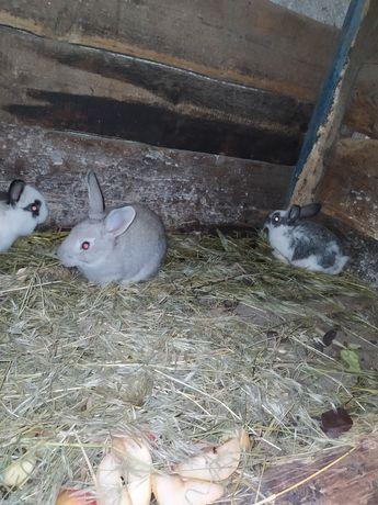 Продам кроликов крольчат