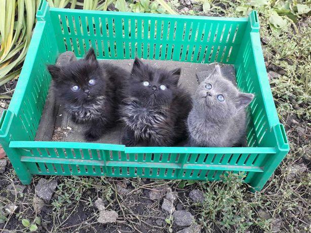 Котята в хорошие руки, бесплатно