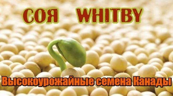 Семена Сои Канадский трансгенный сорт сои WHITBY насіння сої