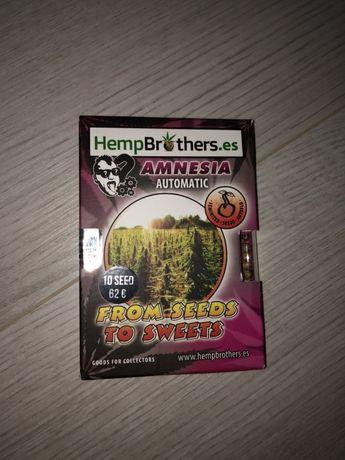 Sprzedam nasiona marihuany odmiany Auto Amnesia
