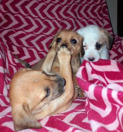 Pieski do adopcji za darmo
