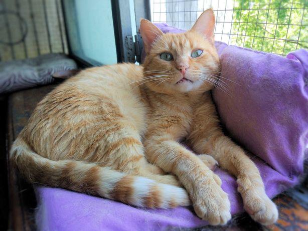 Ласковый деликатный кот 11 месяцев кастрирован