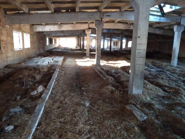 Телятник стайня коровник склад зернохранилище Сосница Чернигов
