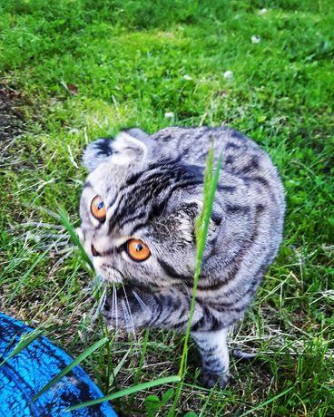 Очень красивая кошка в хорошие руки