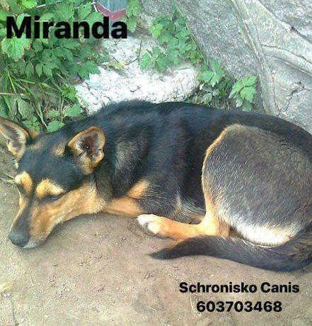 Miranda szuka domu