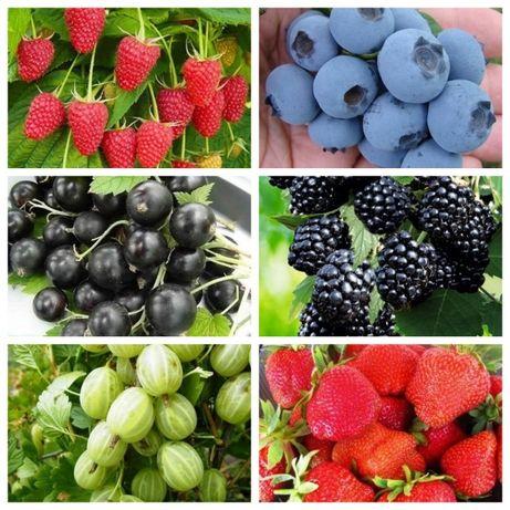 Саженцы фруктовых деревьев и плодовых кустарников. Питомник Чудеса сад