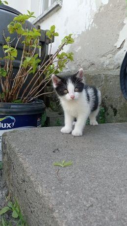 6 tygodniowy kociak prosi o dom