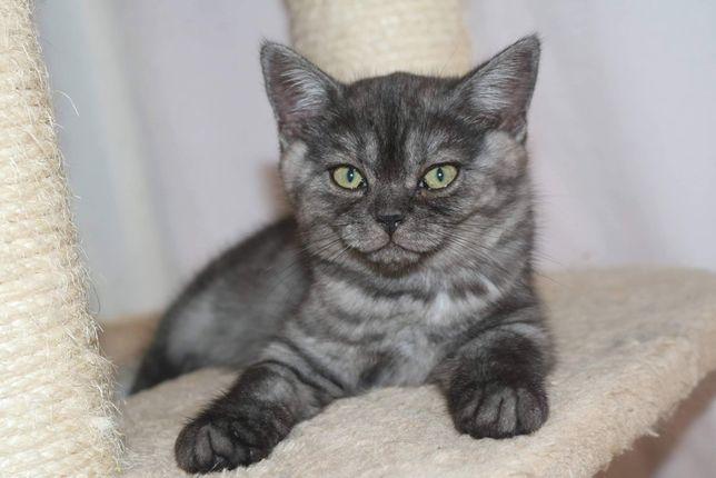 uma gatinha  straight