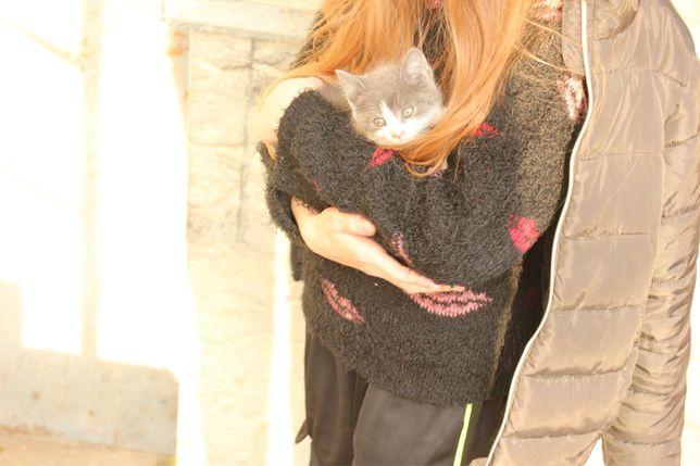 Кошеня кіт киця