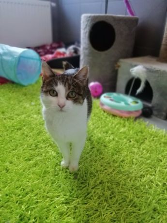 Pilne!Cudna koteczka szuka pilnie dobrego domu