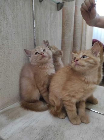 Кошенята Ужгород