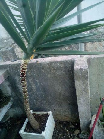 Biocultivo cactus suculentas