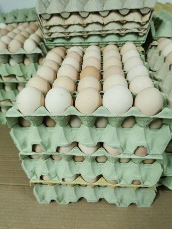 Jajka kremowe M promocja, jaja, z wolnego wybiegu