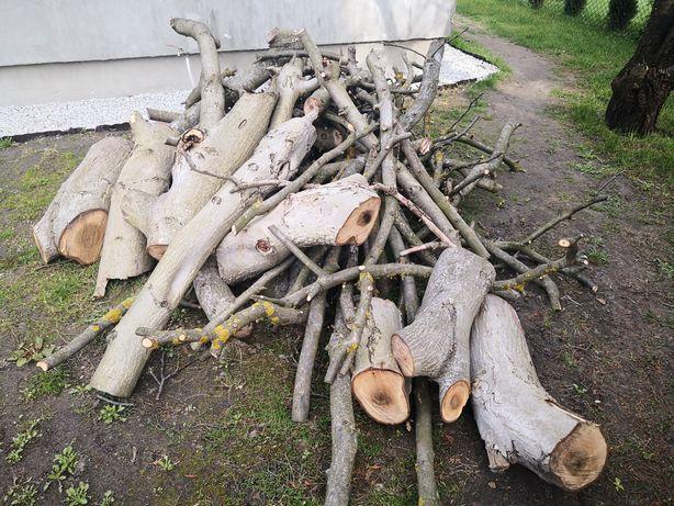Orzech drewno z orzecha