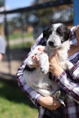 Щенок 6 месяцев Джуди щеня собак пес