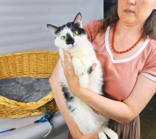 Біло-чорна кішка, кішечка Боніта, 1 рік, чекає на тебе!