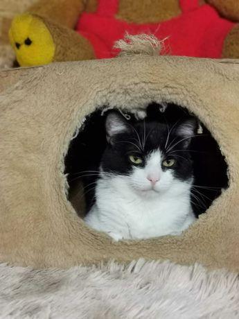 Суперласковый кот Тарасик