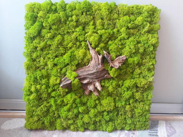Duży obraz z mchu (chrobotek), handmade