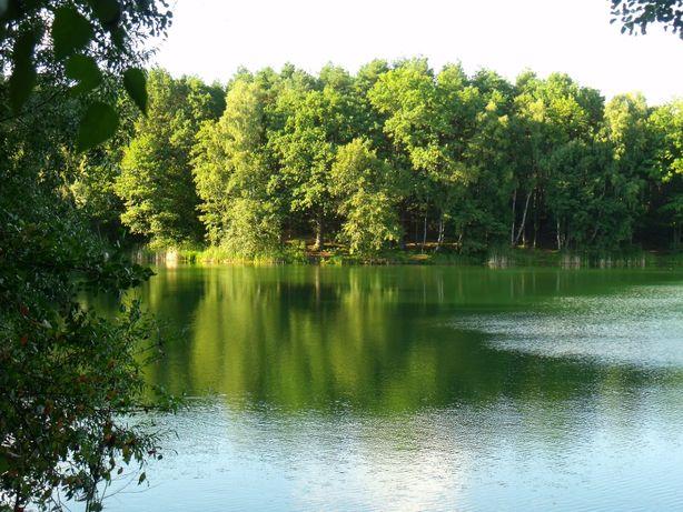 Działka z dwoma domkami kempingowymi w lesie nad jeziorem