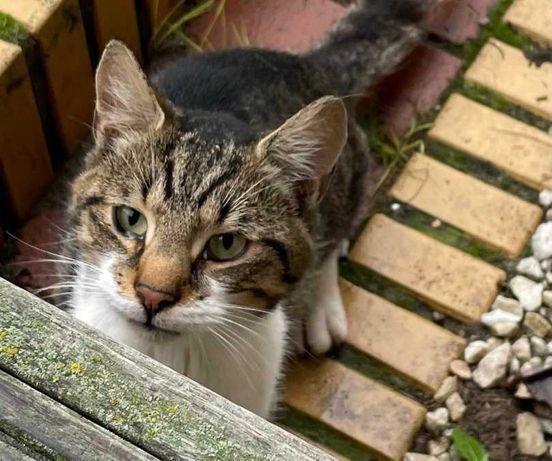 Kot przybłęda czeka na swojego nowego właściciela