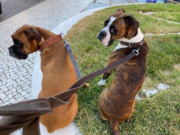 Passeador de Cães Pet Sitting Dog Walker e Dog Táxi em Cascais Estoril