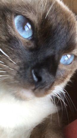 Глаза сапфир