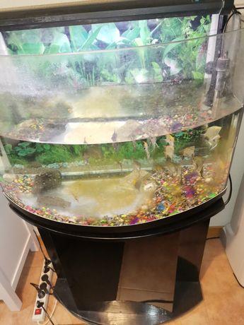Vendo aquário e peixes