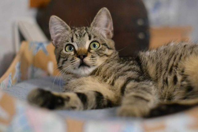 красиве та несамовине  юне кошенятко 4м