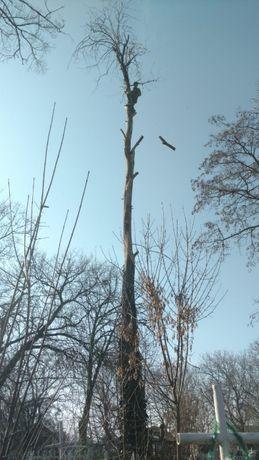 Альпинисты обрежут,спилят деревья.Гарантия аккуратности.Одесса
