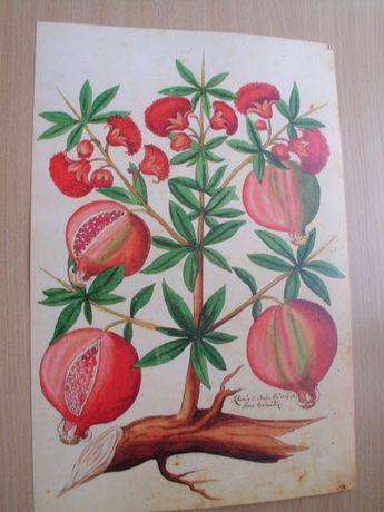 Warzywa 1535 r. cz. 2 reprint XVI w. grafik do wystroju domu