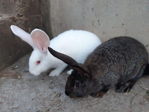 Кролики непородясті. Здорові доглянуті.