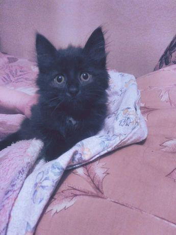 Отдам в хорошие руки котенка. Девочка 2 месяца.