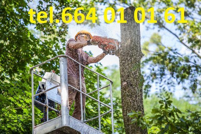 Wycinka drzew, wycinka drzewa, Rębak, Stryków, Zgierz, Brzeziny