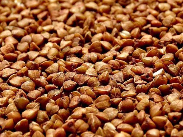 Продам на посів насіння гречки