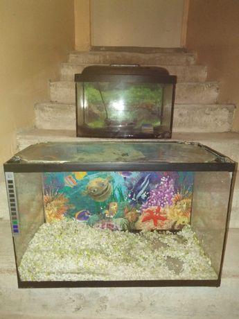 Akwarium z pokrywa