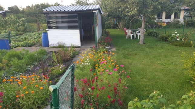Działka rekreacyjna ogrodnicza ROD