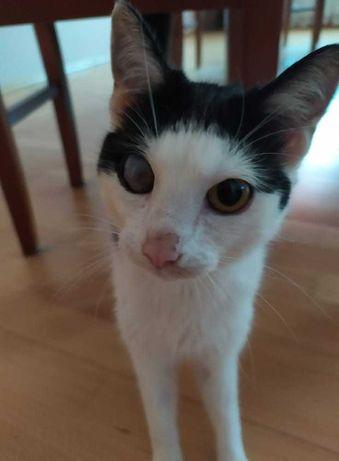 Roczna kotka szuka niewychodzącego domu na terenie Krakowa i okolic
