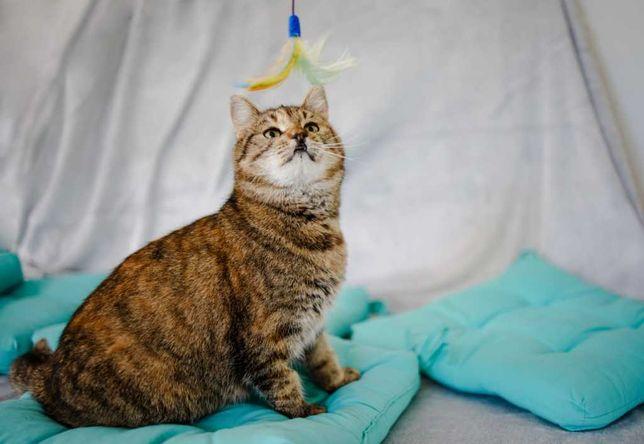 Магда - особенная ласковая кошка в поисках дома