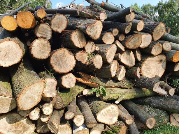 Drewno opałowe dąb, kominkowe