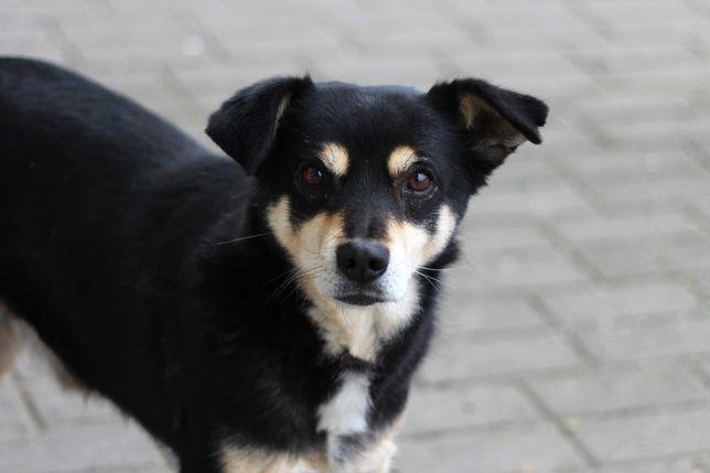 Fikander- młody i wesoły pies szuka dobrego domu