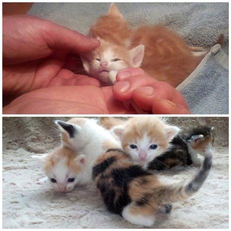 Гостиница,передержка для котов,кошек и котят.