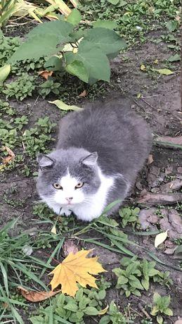 Кот кошки