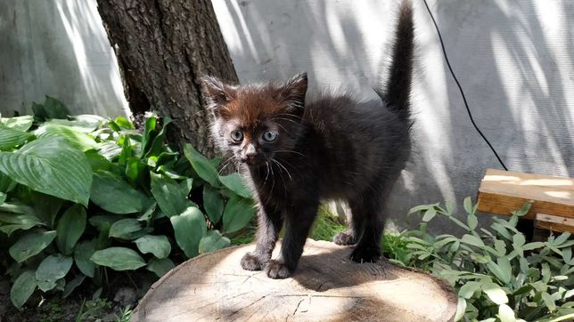 Отдам котёнка Фастов