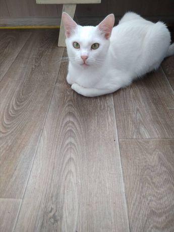 Кот  белоснежный  кастрирован  привит