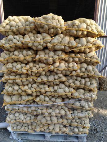 Ziemniaki jadalne 1000 woreczków  ,duże ilości