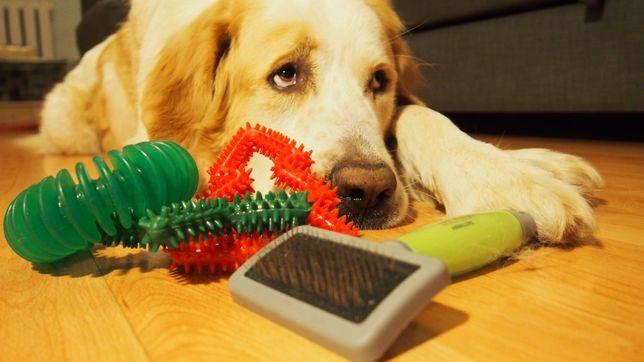 Zestaw zabawki szczotka dla psa