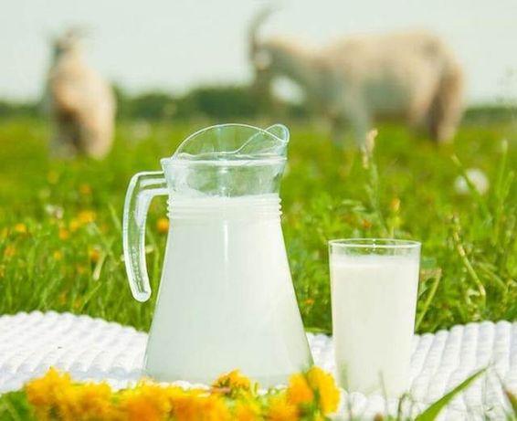 Домашнее козье молоко