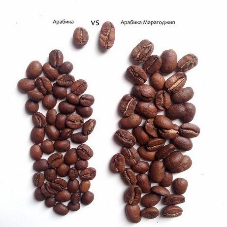 Арабика Кофе Зерновой Никарагуа Марагоджип 1 кг Бесплатная доставка